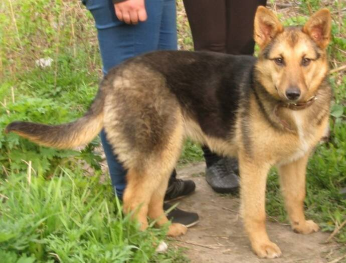 В Новосибирске бездомная собака взяла под опеку семерых котя 5_5