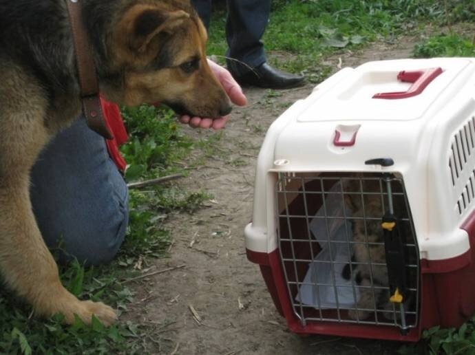 В Новосибирске бездомная собака взяла под опеку семерых котя 9_2