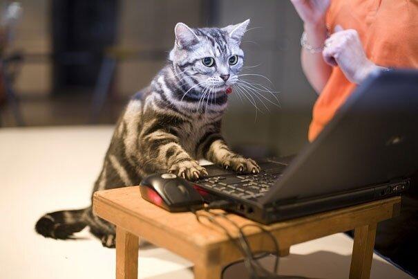 Животные, которые забыли о том, что они - животные. Funny-animals-doing-human-things-22