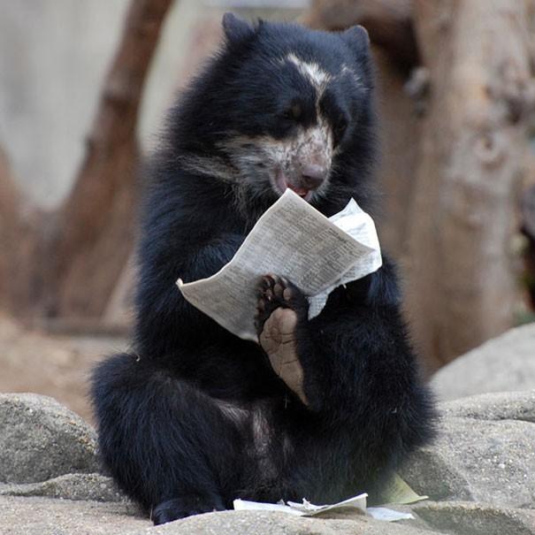 Животные, которые забыли о том, что они - животные. Funny-animals-doing-human-things-25