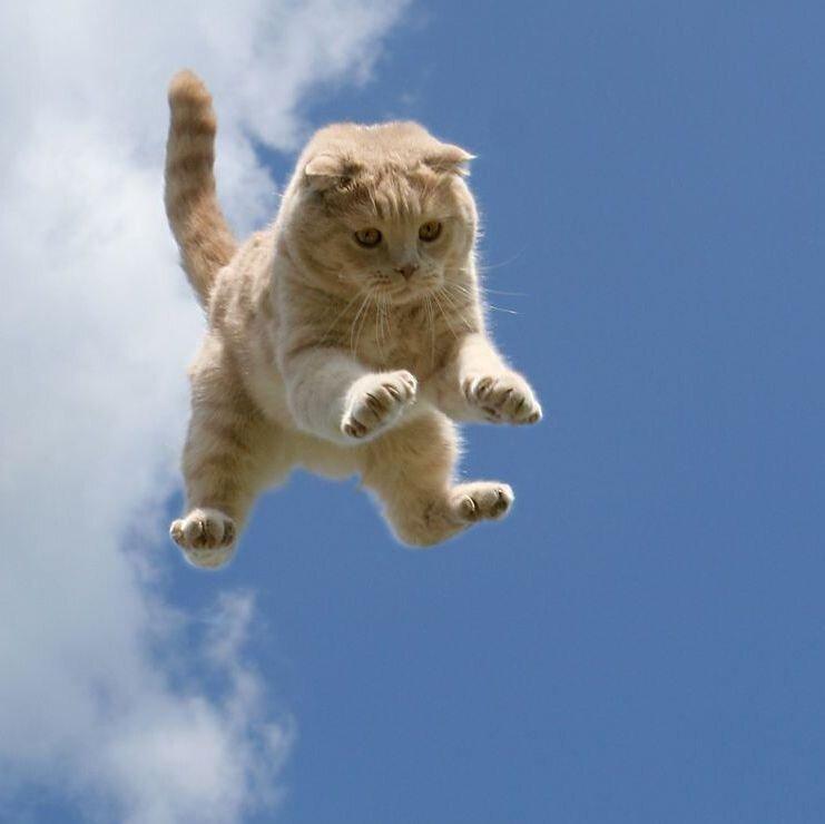 Почему у кошек 9 жизней 2_002