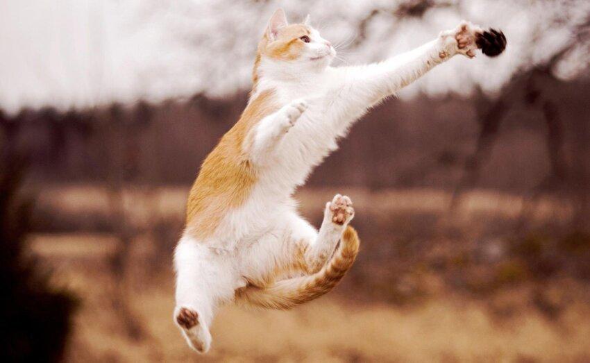 Почему у кошек 9 жизней 2_005