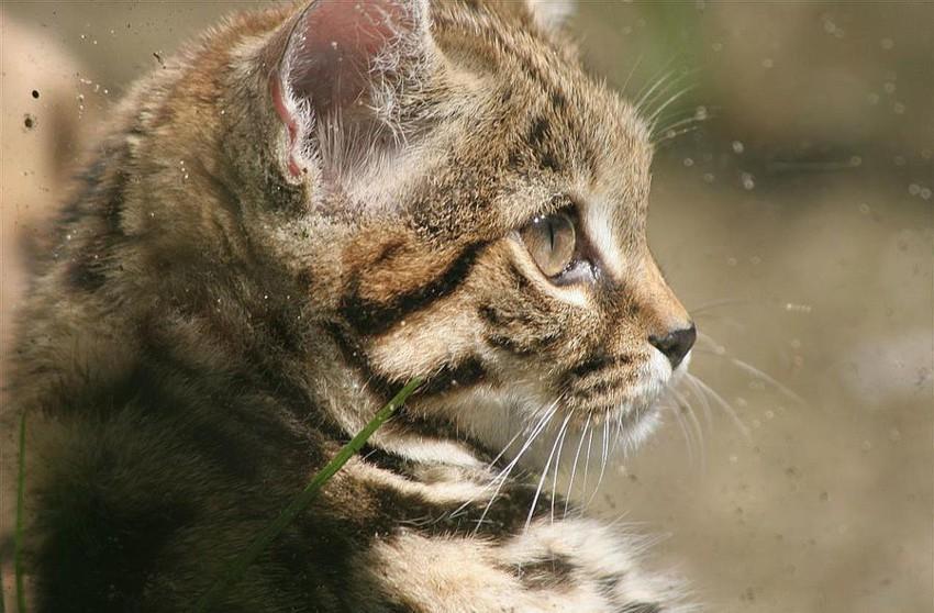Почему у кошек 9 жизней 2_007