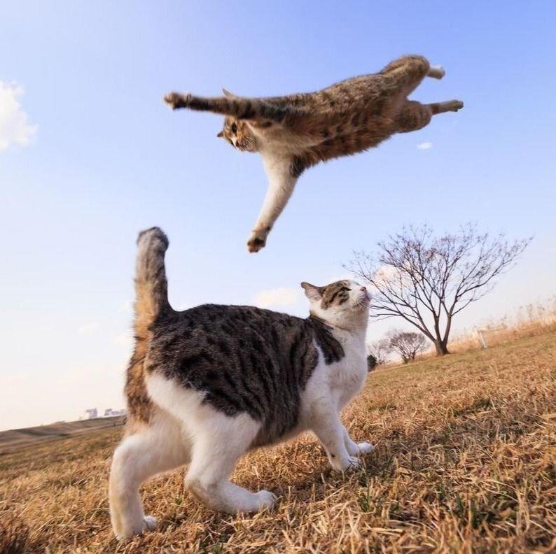 Почему у кошек 9 жизней 2_008