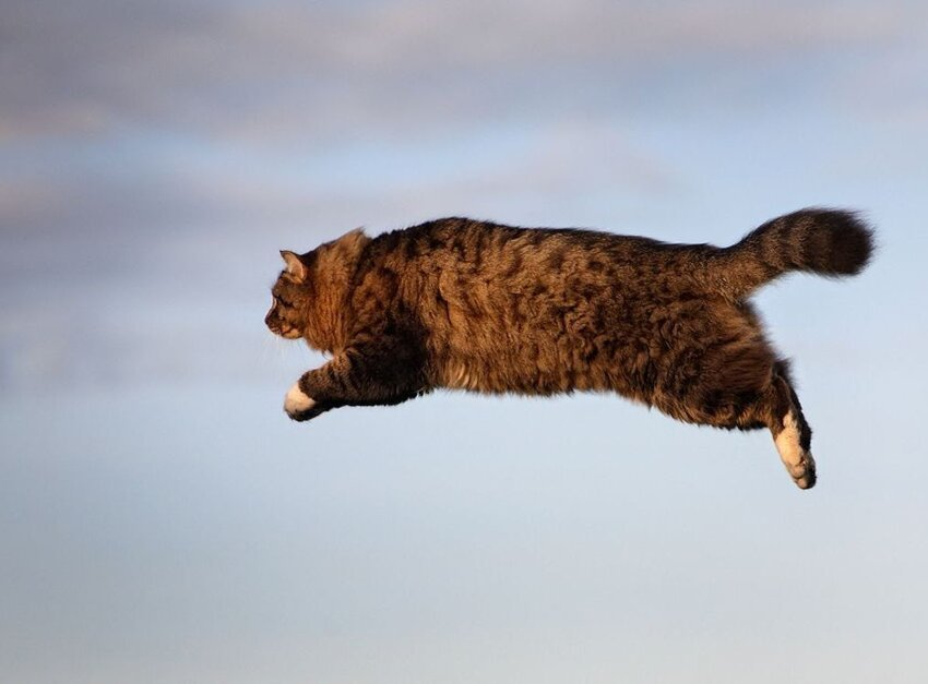 Почему у кошек 9 жизней 2_009