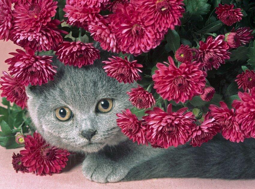 Почему у кошек 9 жизней 3_003