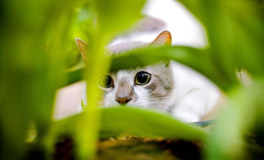 Почему у кошек 9 жизней 3_004