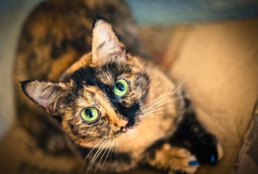 Почему у кошек 9 жизней 3_006
