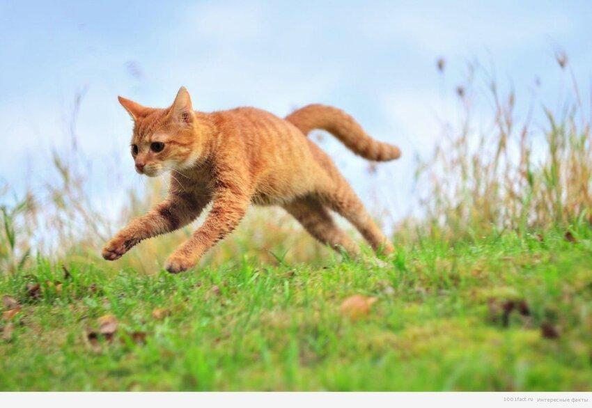 Почему у кошек 9 жизней 3_010