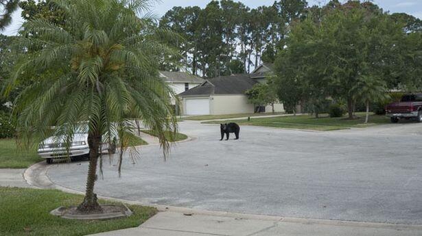 Медведь прилег отдохнуть в гамаке 5_5