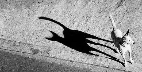 От улыбки стало вдруг светлее.. Funny-shadow-fails-illusions-38