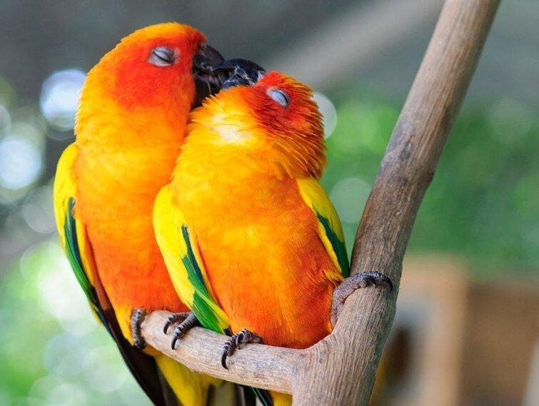 15 очаровательных поцелуев среди животных 20140606163713
