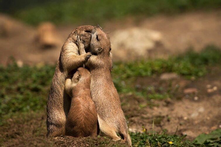 15 очаровательных поцелуев среди животных 20140606163713_0