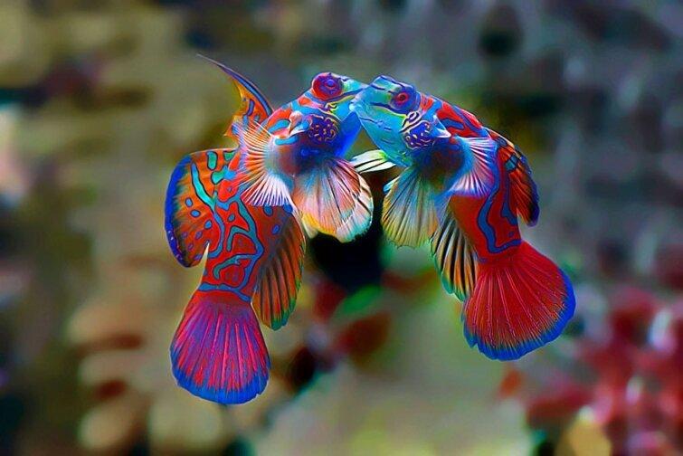 15 очаровательных поцелуев среди животных 20140606163714