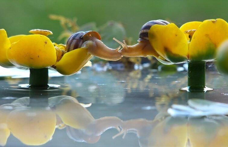 15 очаровательных поцелуев среди животных 20140606163716_0
