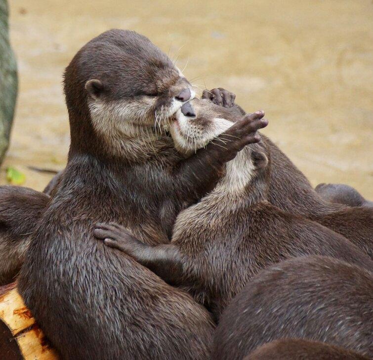 15 очаровательных поцелуев среди животных 20140606163717