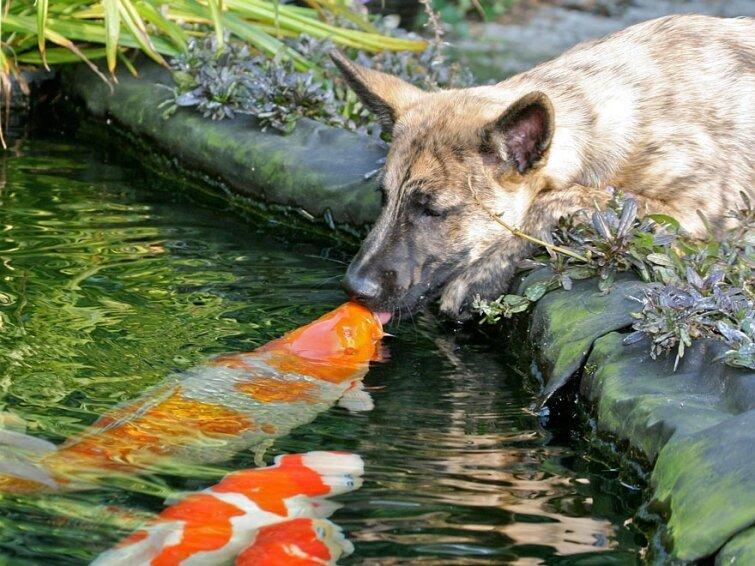 15 очаровательных поцелуев среди животных 20140606163718