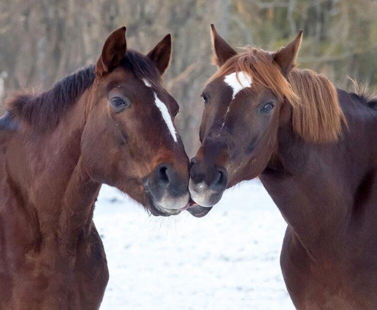 15 очаровательных поцелуев среди животных 20140606163719