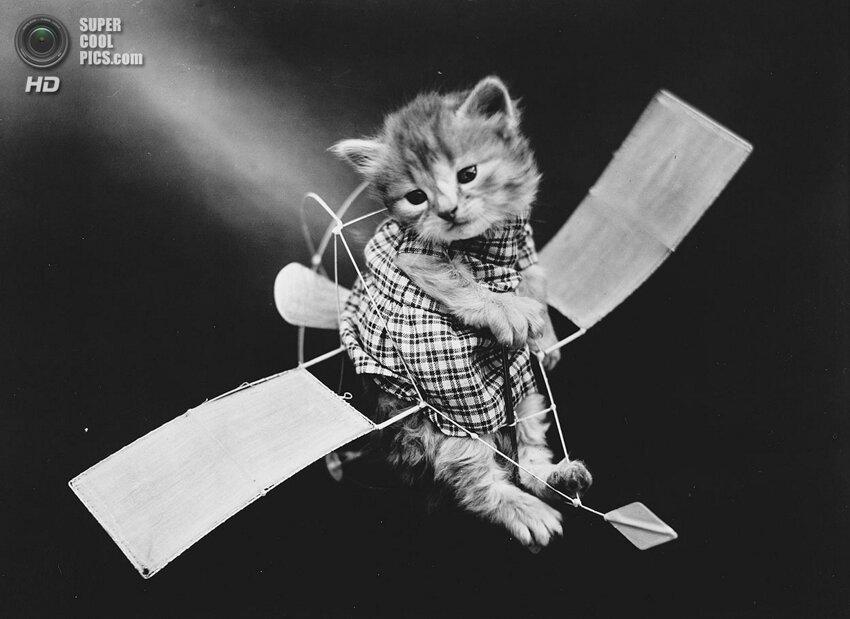 Животные Гарри Уиттера Фриса. «Фотошоп» столетней давности Supercoolpics_01_16052014112156