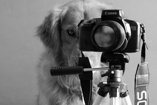 Творчество природы Dog1
