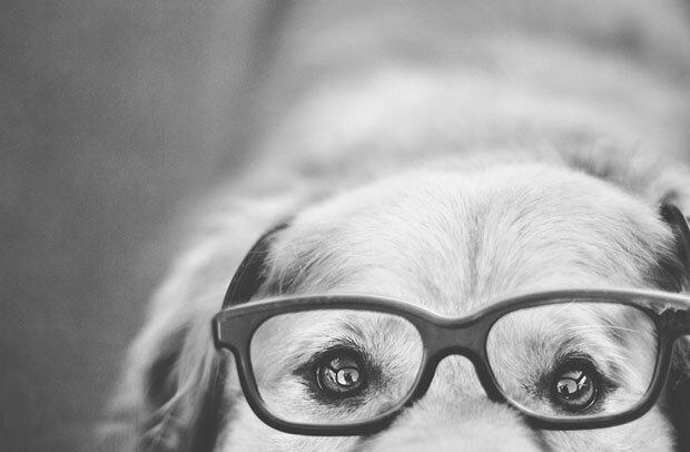 Творчество природы Dog11