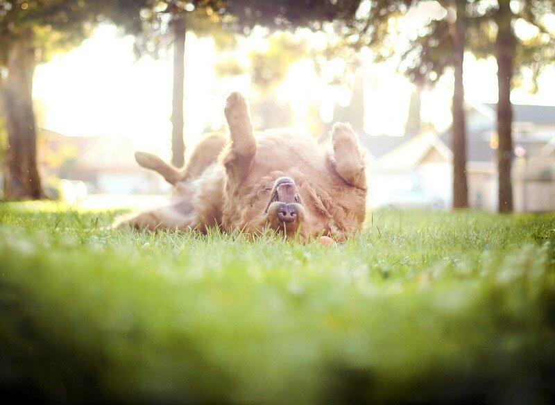 Творчество природы Dog3