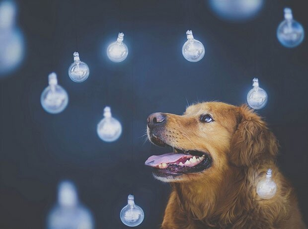 Творчество природы Dog4