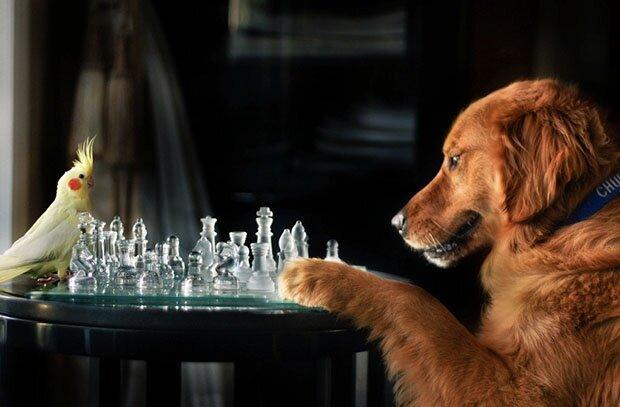 Творчество природы Dog7