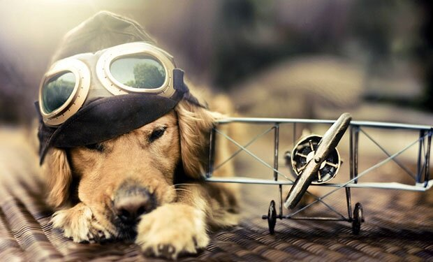 Творчество природы Dog8
