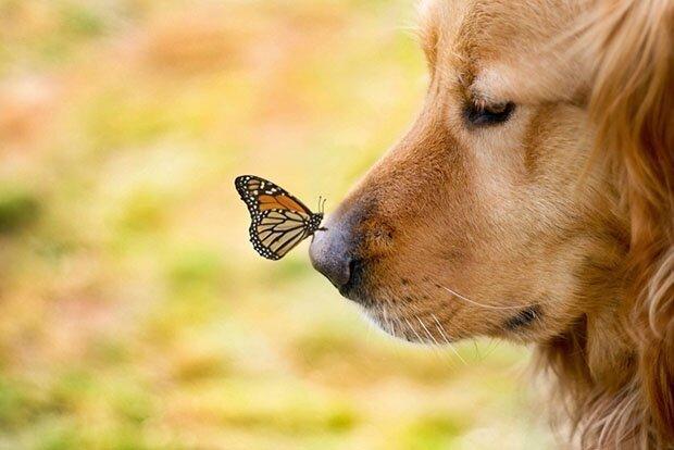 Творчество природы Dog9