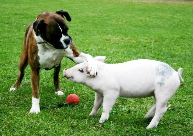 Невероятная дружба между животными 011dae7aaf710f173e54f893a60ddffa