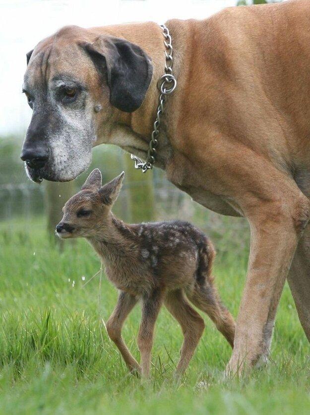 Невероятная дружба между животными 4299a1bd04b6ff9f6884c900371da74a
