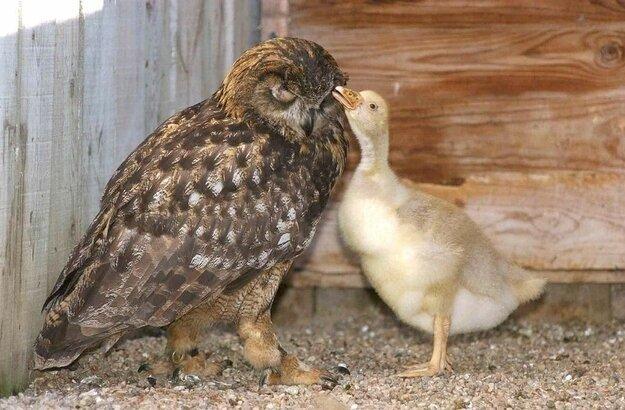 Невероятная дружба между животными 4ef3233d976480e3de238194bbd50ca2