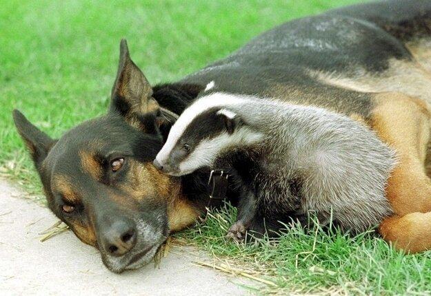 Невероятная дружба между животными 5289f0248212c601e89672f439f7e5a0