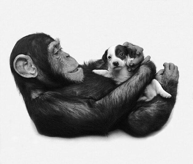 Невероятная дружба между животными 6054bfcf120c39e2f440a8031f3df06e