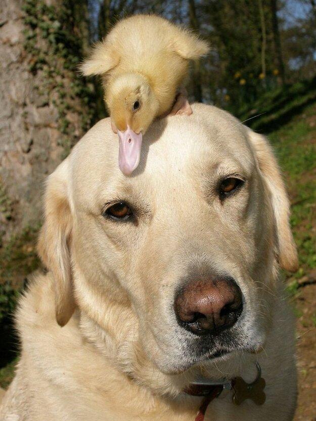 Невероятная дружба между животными 759e6ae74367ca66e768a72eec771094