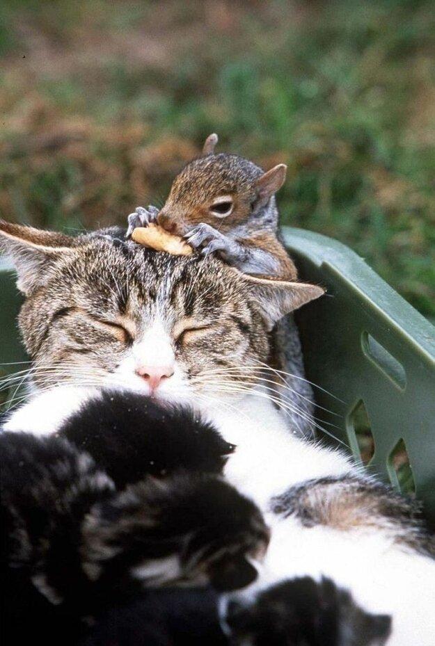 Невероятная дружба между животными 79faabacd59f8b72f426ec74fba28c00