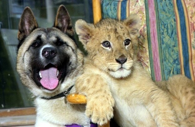 Невероятная дружба между животными 974020d282d5e4484f5360da4dbc8d3b
