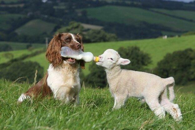 Невероятная дружба между животными D57d23e6da525d9760c666c36ca06aaa
