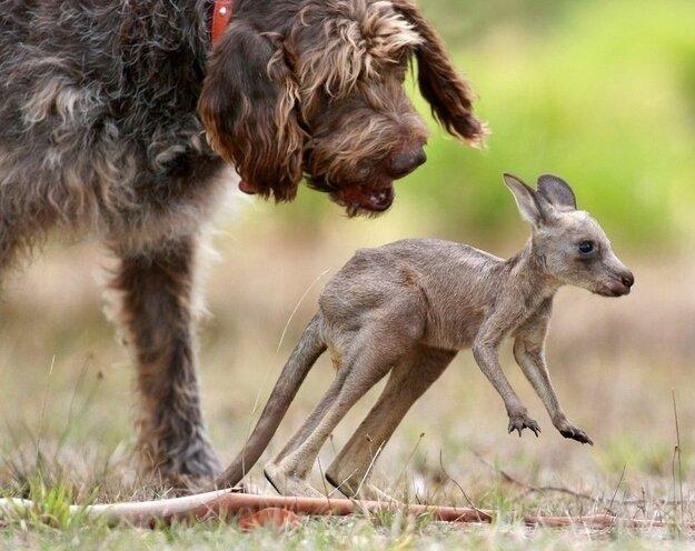 Невероятная дружба между животными Ea151c4b2a6a9fb3efda65965b384012