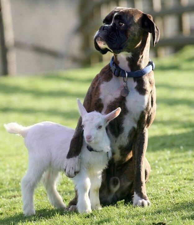 Невероятная дружба между животными Fe1a178599c6ed8b514d0c9801abe178