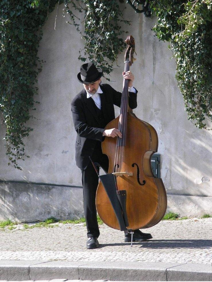 Не путайте музыкальные инструменты! 1_kontrabas