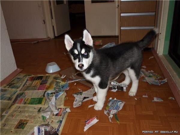 22 невероятных факта о собаках  1_1293441645_8-45