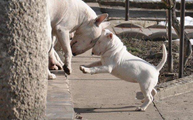 22 невероятных факта о собаках  1_1403461829_06