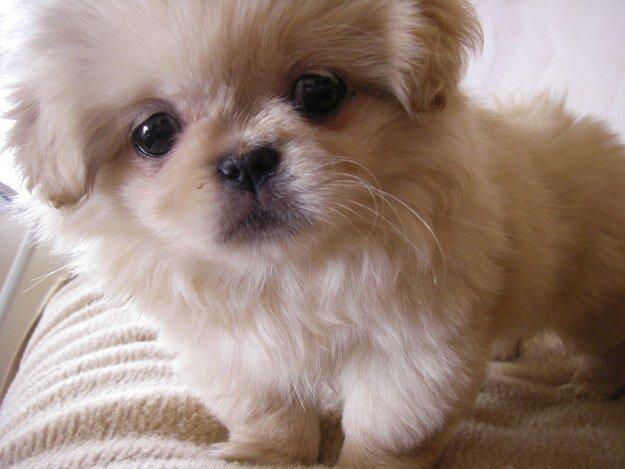 22 невероятных факта о собаках  1_1403461840_17