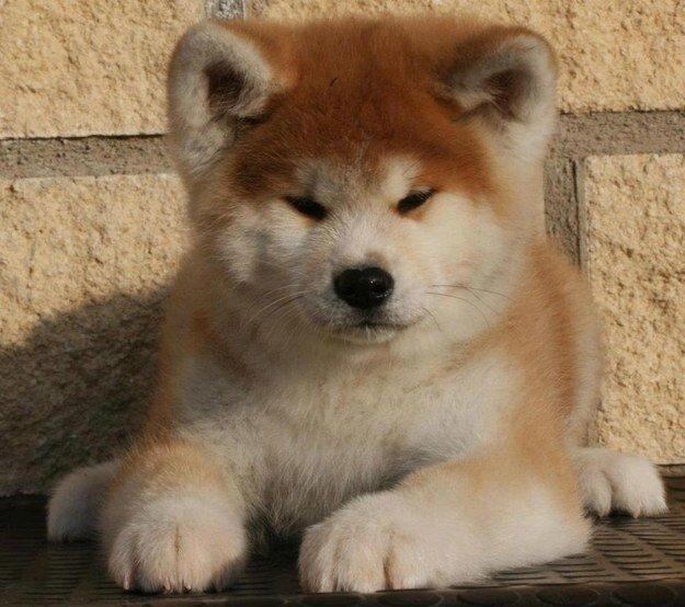 22 невероятных факта о собаках  1_1403461851_21