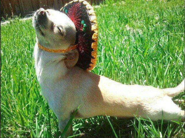 22 невероятных факта о собаках  1_1403461854_10