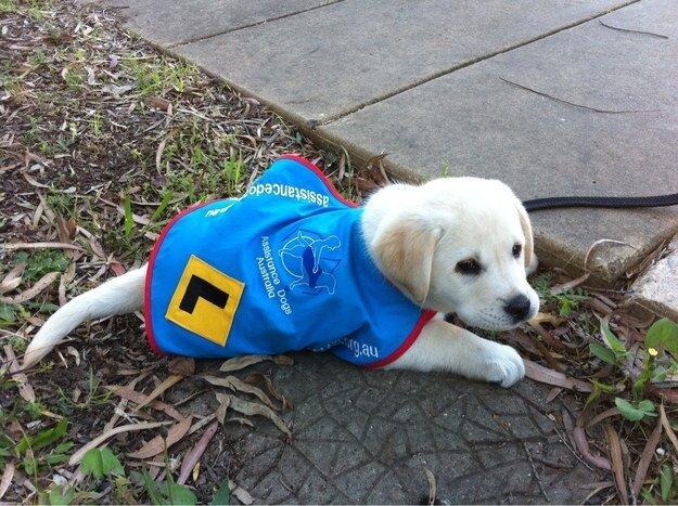 22 невероятных факта о собаках  1_1403461881_14