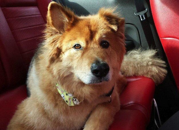 22 невероятных факта о собаках  1_1403461884_08