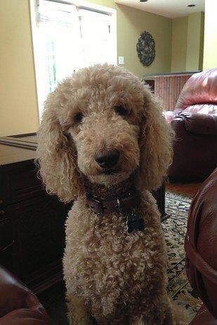 22 невероятных факта о собаках  1_1403464242_18-2